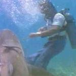 ...and a shark!